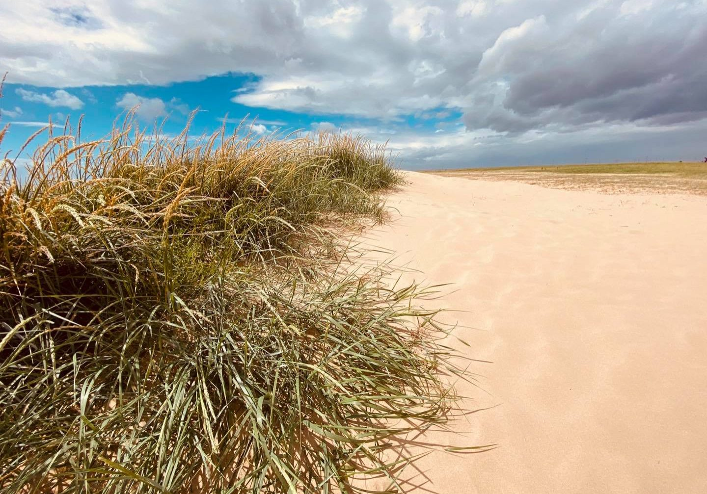 Dune succession at Hoylake