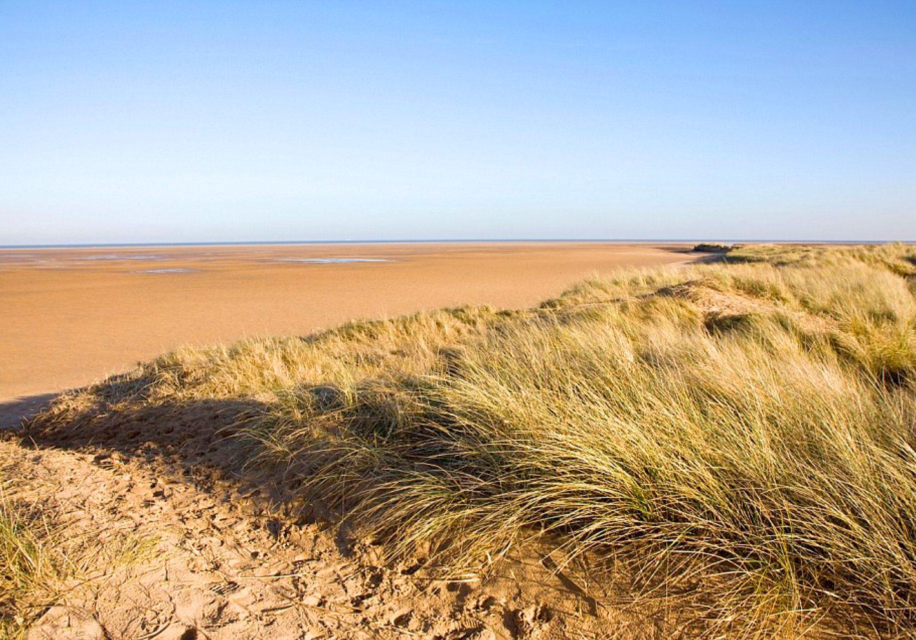 Established dune system